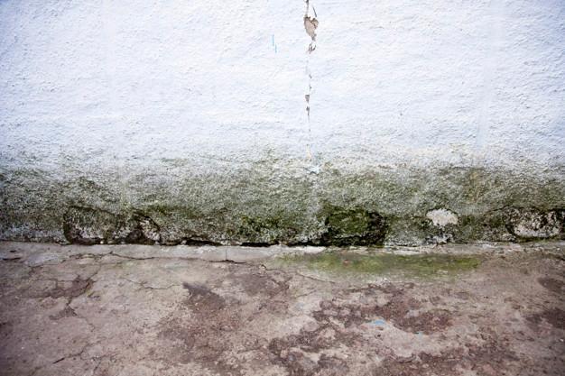 parede mofada