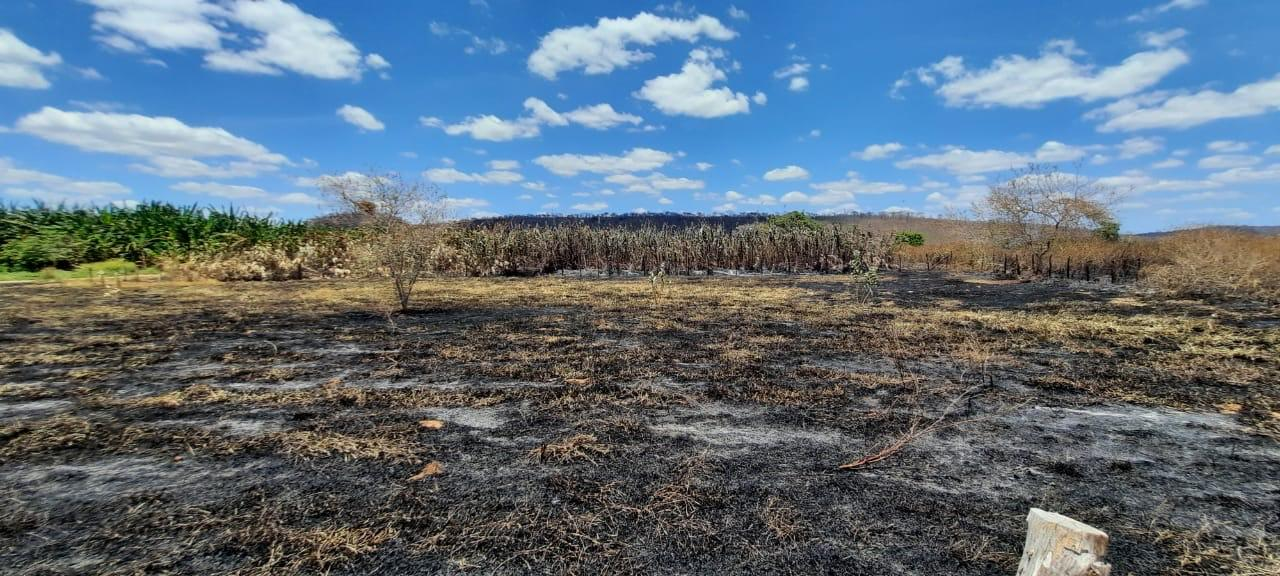 Fogo destruiu tudo na fazenda
