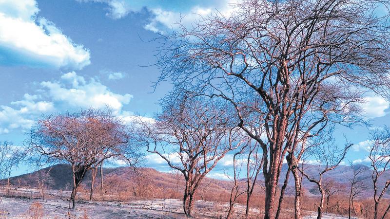 Os Incêndios florestais destroem a fauna e a flora, comprometem a qualidade do solo e geram poluição FOTO: ALEX PIIMENTEL