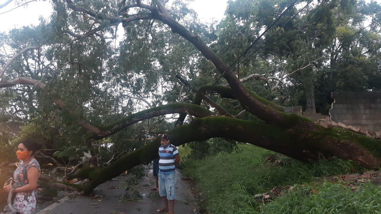 Árvore cai na BR-222, em Caucaia, após forte precipitação