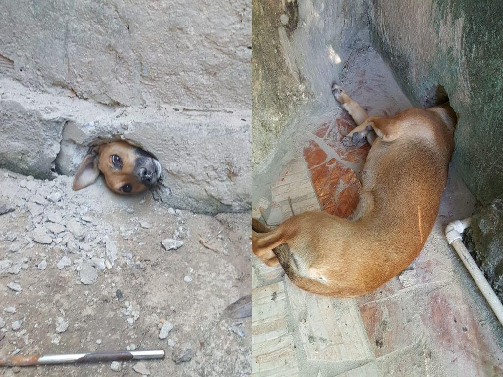 Cadela presa em buraco de muro em Minas; imagem com dois lados da parede