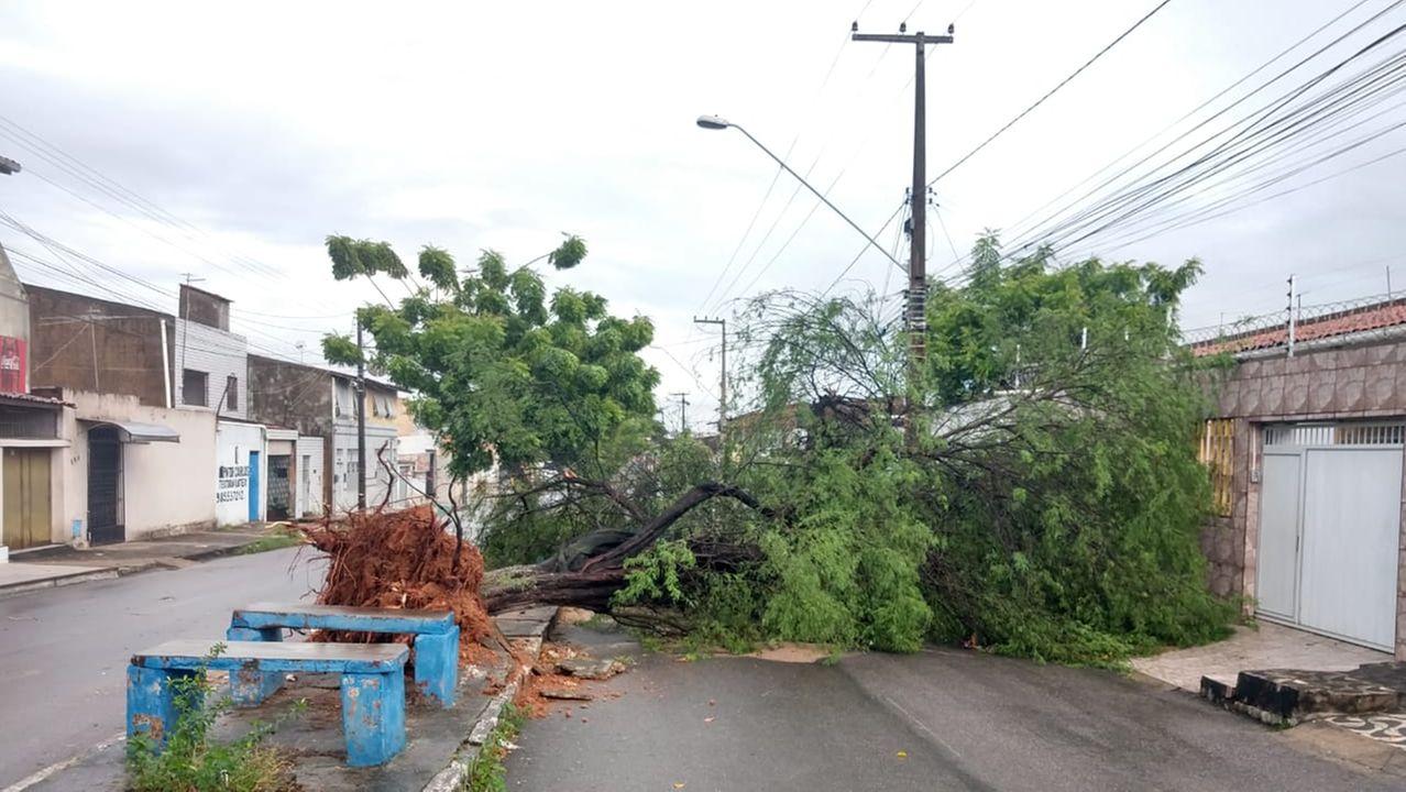 árvore caiu no Conjunto Ceará
