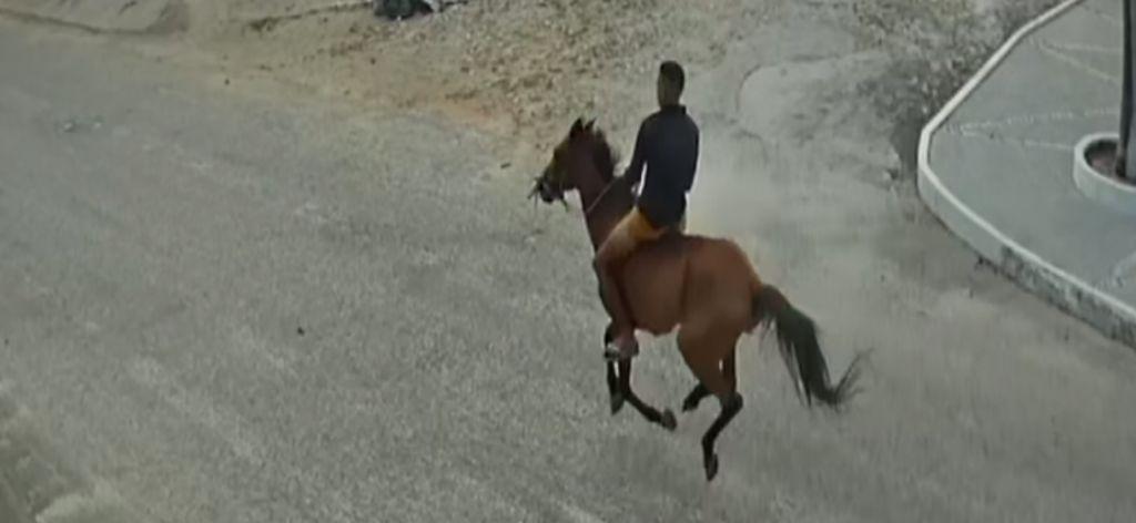 Cavalo em assalto