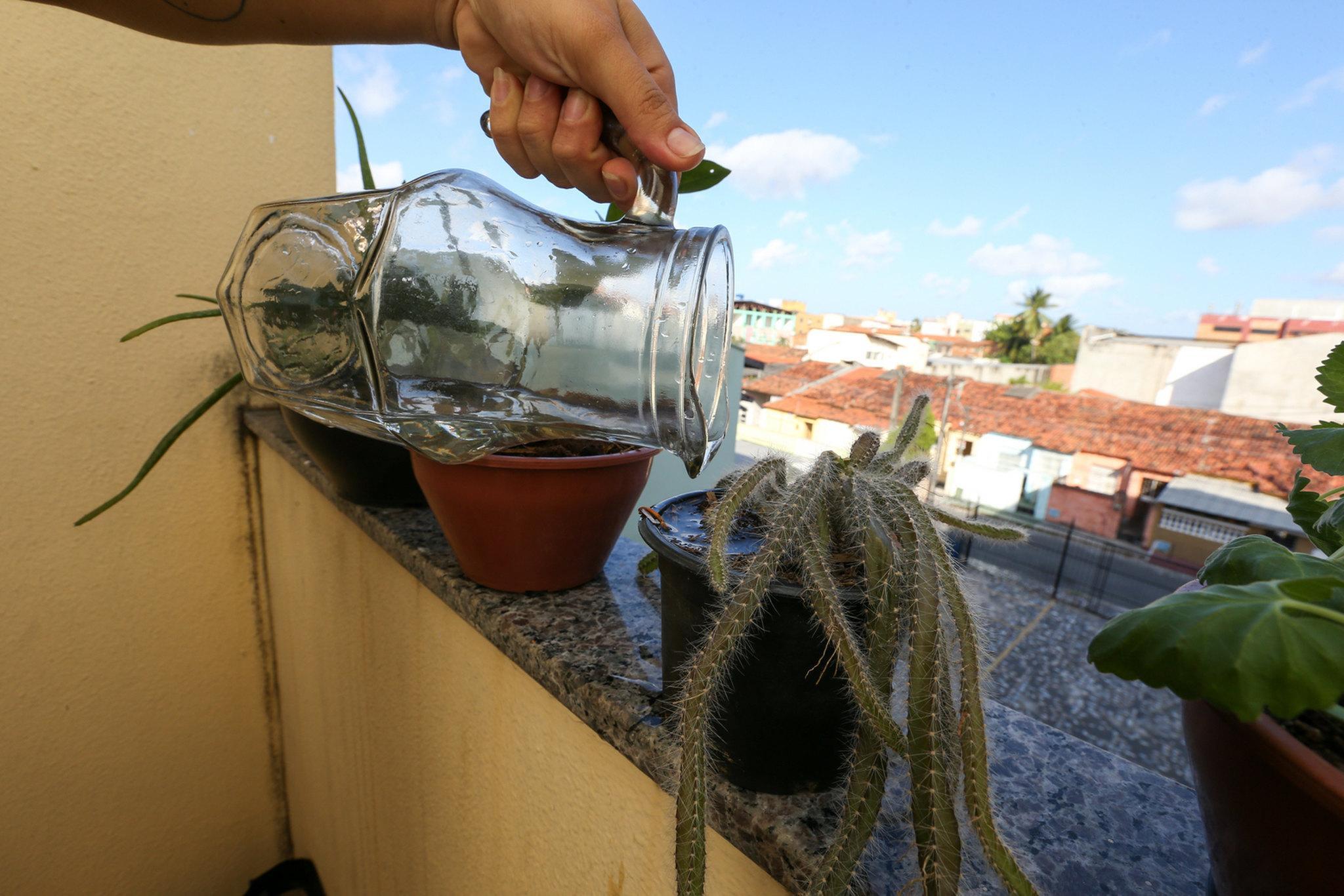 mão de mulher põe água nas plantas