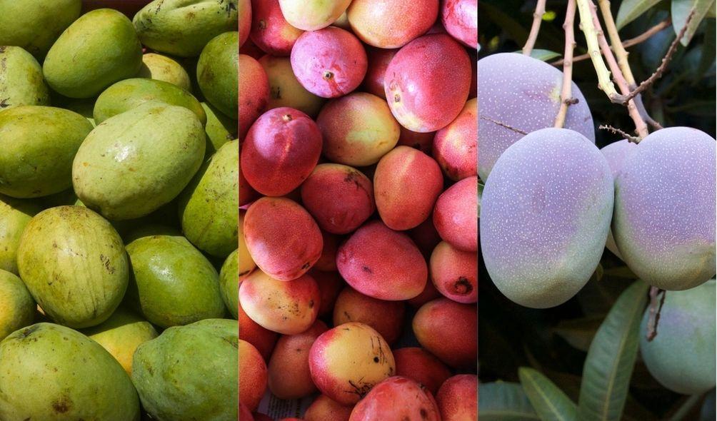 Montagem com fotos de mangas nas cores verde, rosa e arroxeada