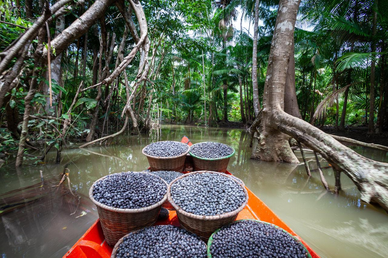 Tigelas com frutos do açaí em rio