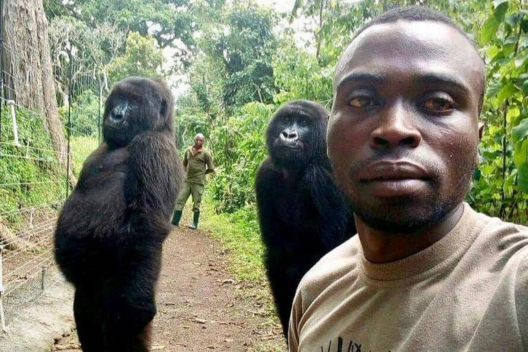 Gorila africana famosa por selfie morre nos braços de cuidador