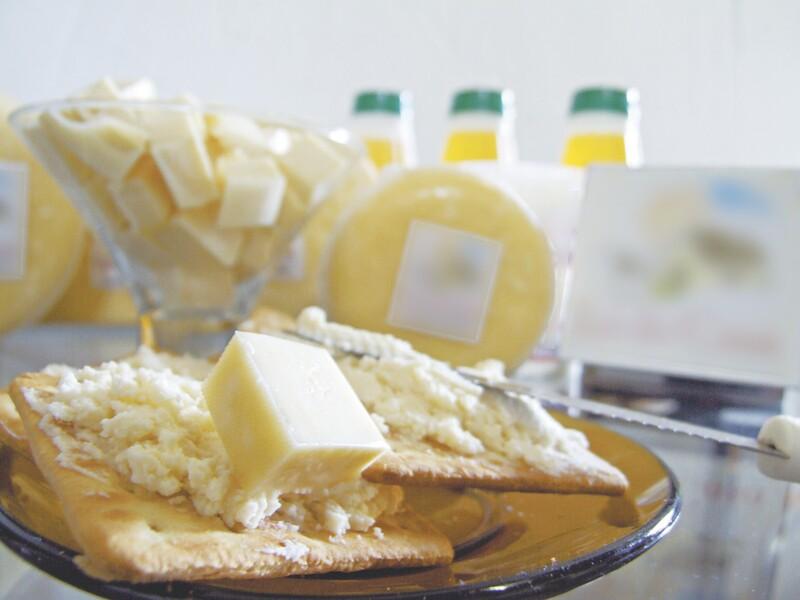 Produção ilegal de queijo no CE