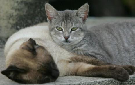 Os animais já foram vacinados e estão devidamente prontos para ganhar um novo lar