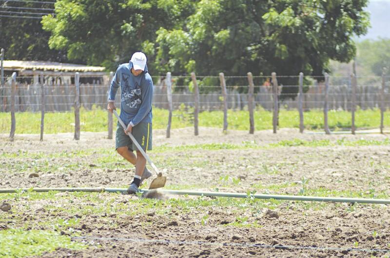 Pequenos produtores podem dispor do reconhecimento legal da propriedade do imóvel rural, o que possibilitará requerer empréstimo bancário