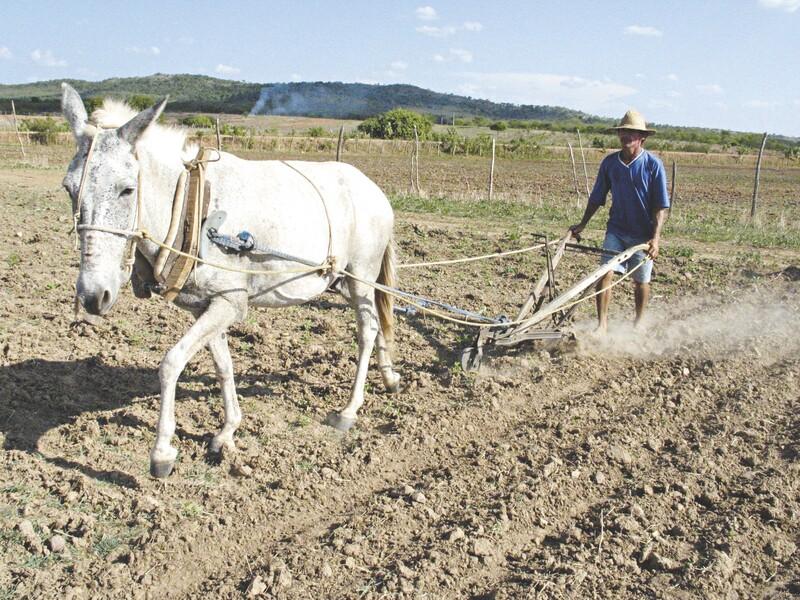 Falta umidade à terra para receber as promissoras sementes