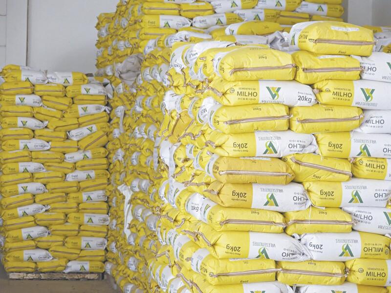 A previsão é distribuir mais de 3,5 mil toneladas de sementes de milho, feijão, sorgo, algodão e gergelim, além de manivas de mandioca
