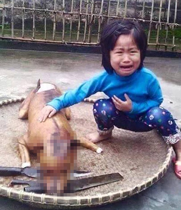 O cachorro havia desaparecido alguns dias antes de a menina o encontrar cozido em uma barraca especializada neste tipo de carne